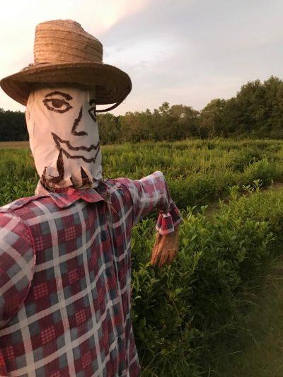 Scarecrow looks like Donnie!